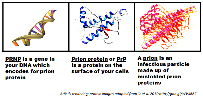 What are prions?